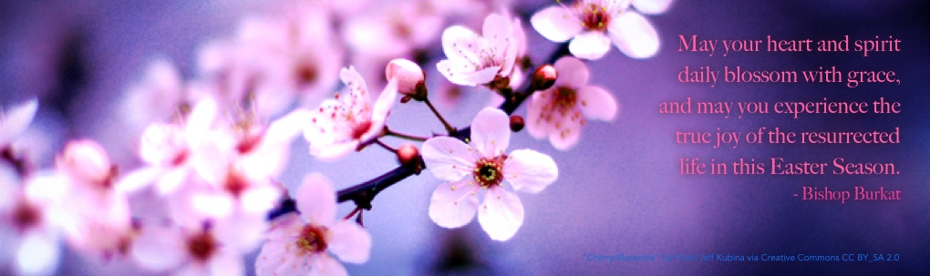 flickr_cherryblossoms_JeffKubina_CCRemixed1 promo