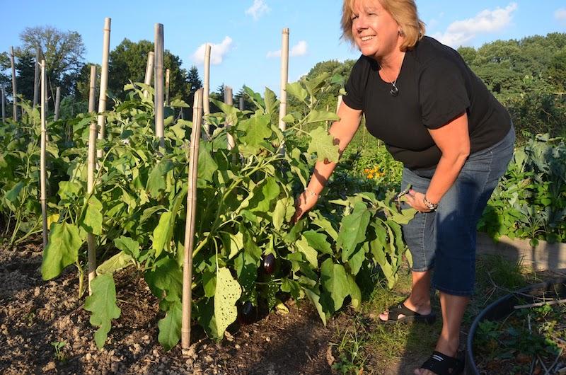 Volunteer Karen Yerkes picks eggplant at the Resurrection Garden.